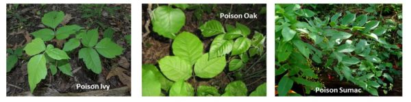 Poison Ivy Oak and Sumac with Text
